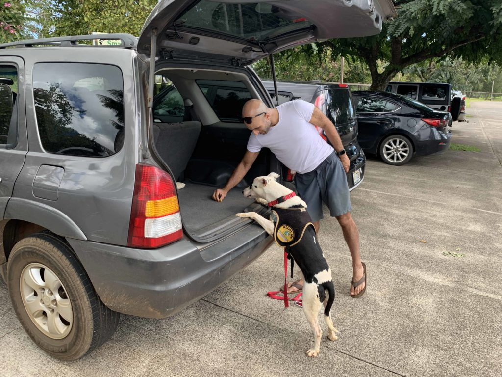 After getting the dog comfortable with us, we then had to coax him into the car with treats at the Humane Society in Kauai, Hawaii