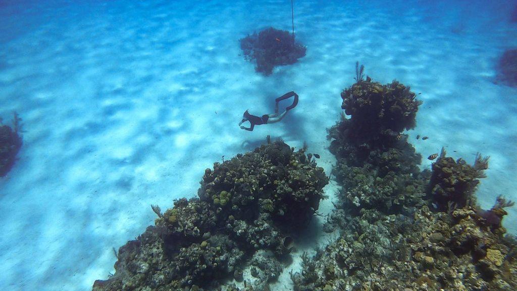 Coral reefs and underwater freediver in Roatan, Honduras